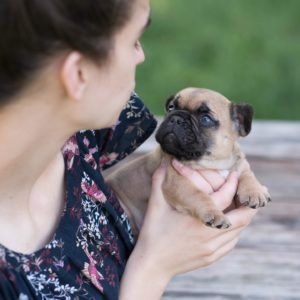 Frenchie puppies for sale,french bulldogs for sale